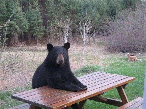 Seated-Animal-17
