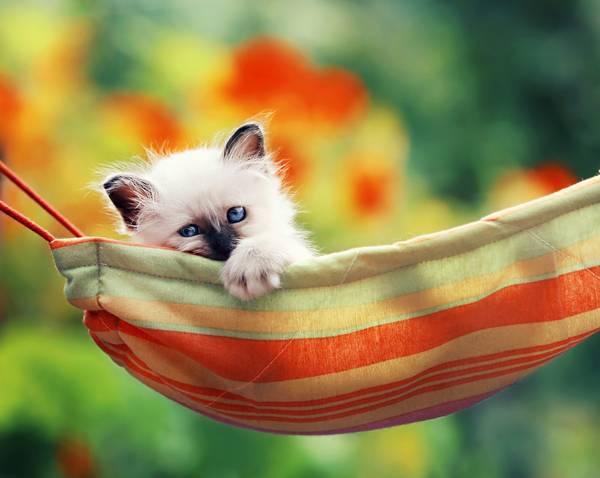12-in-the-hammock
