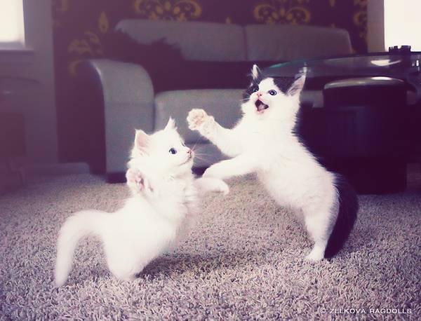 18-dancing-cats
