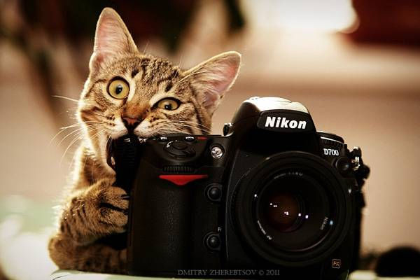 27-Funny-cat