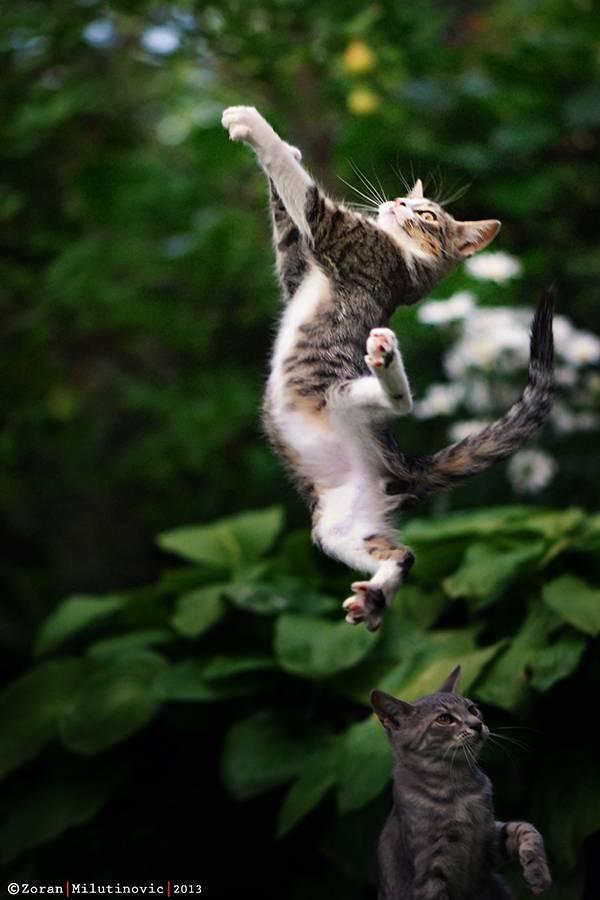 4-Super-cat