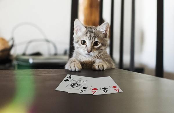 41-Maggie-poker-face
