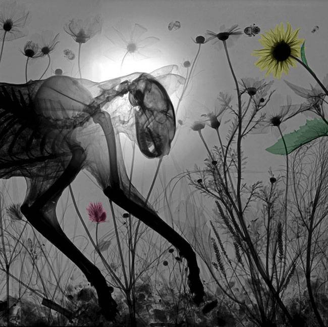 http://liniyasvet.com.ua/wp-content/uploads/2013/12/Arie-vant-Riets-X-rays-07.jpg