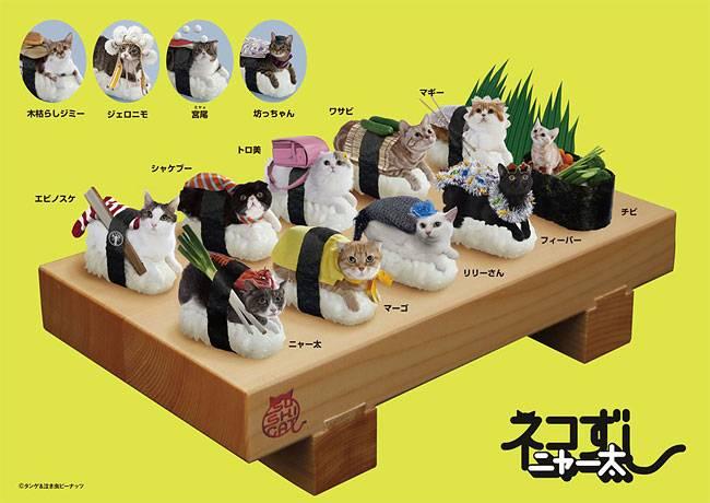 Суши из котиков