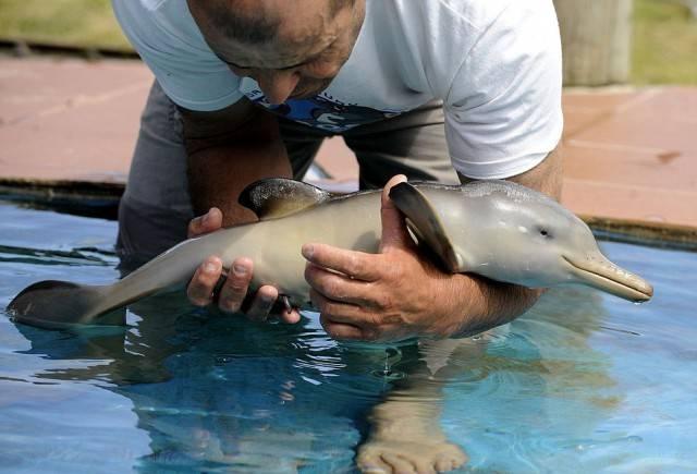 маленький дельфин или дельфиненок