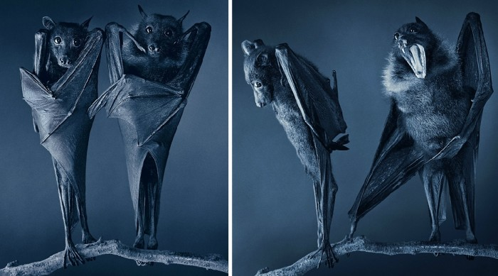 More-Than-Human-Tim Flach-02