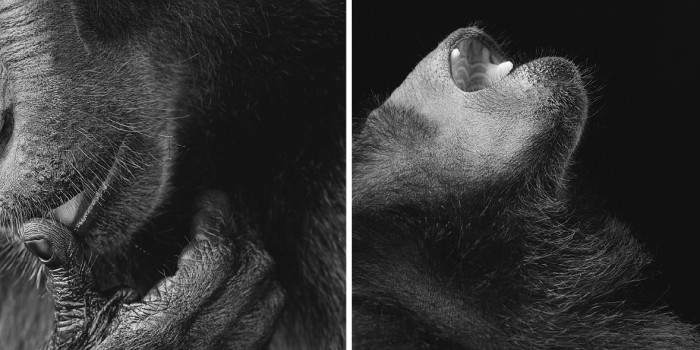 More-Than-Human-Tim Flach-03