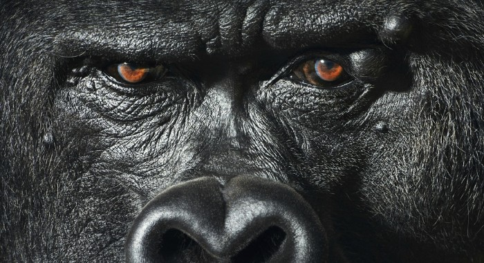 More-Than-Human-Tim Flach-05 (10)