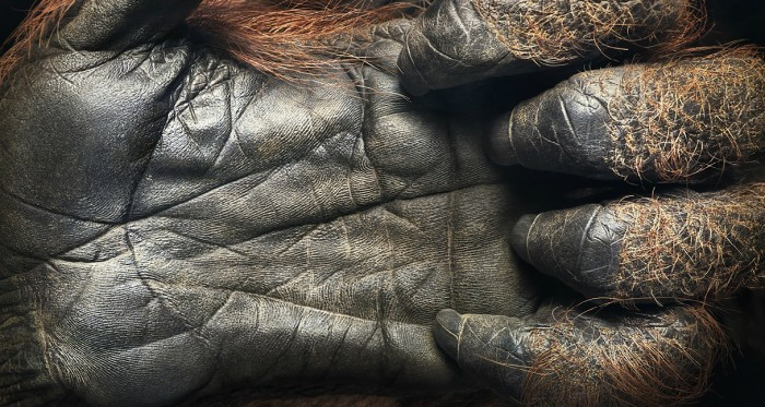 More-Than-Human-Tim Flach-05 (11)