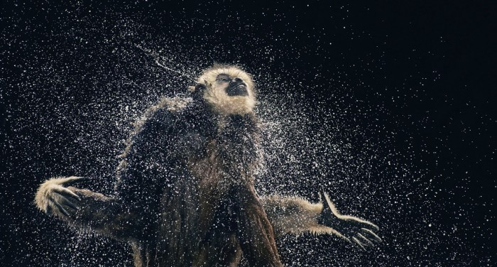 More-Than-Human-Tim Flach-05 (12)