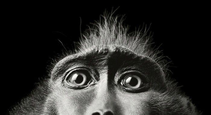 More-Than-Human-Tim Flach-05 (16)