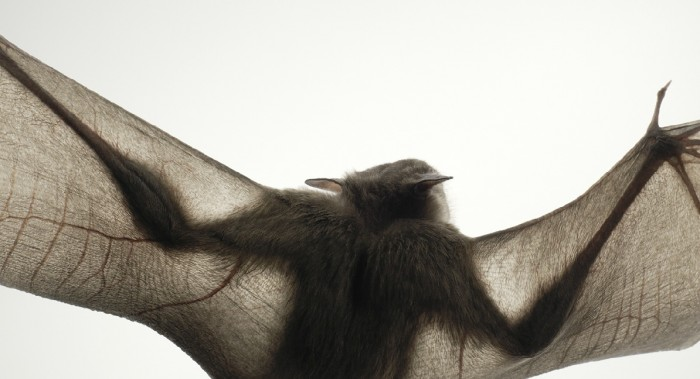 More-Than-Human-Tim Flach-05 (17)