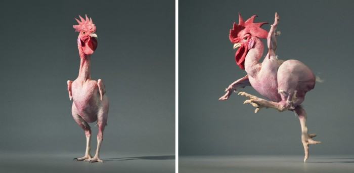 More-Than-Human-Tim Flach-05 (18)