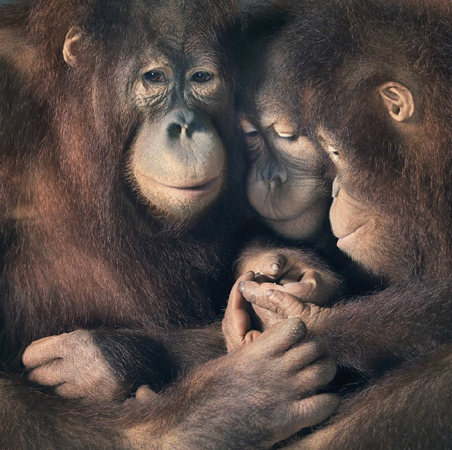 More-Than-Human-Tim Flach-05 (19)