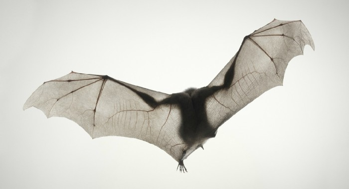 More-Than-Human-Tim Flach-05 (22)