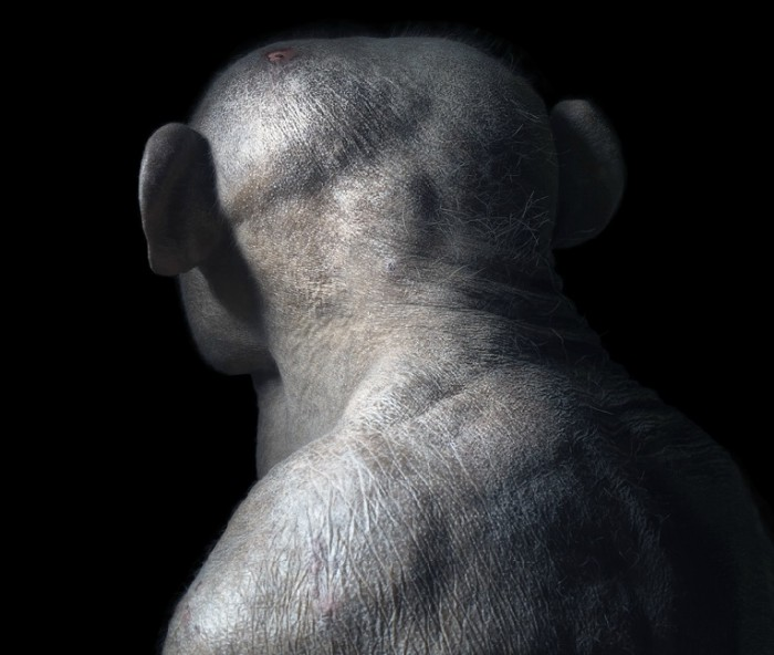 More-Than-Human-Tim Flach-05 (23)