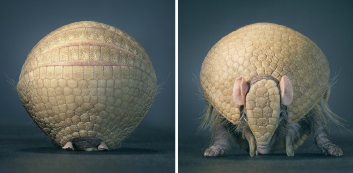 More-Than-Human-Tim Flach-05 (31)