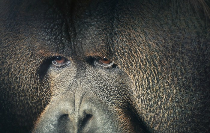More-Than-Human-Tim Flach-05 (32)