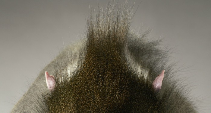 More-Than-Human-Tim Flach-05 (34)
