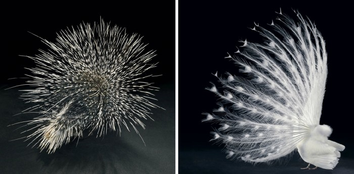 More-Than-Human-Tim Flach-05 (35)