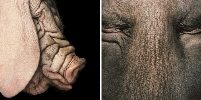 More-Than-Human-Tim Flach-05 (44)