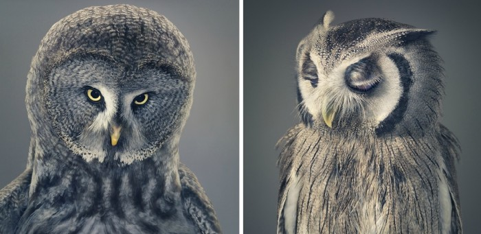 More-Than-Human-Tim Flach-05 (6)