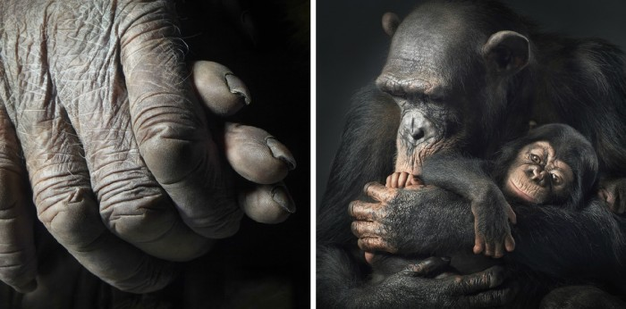 More-Than-Human-Tim Flach-05 (8)