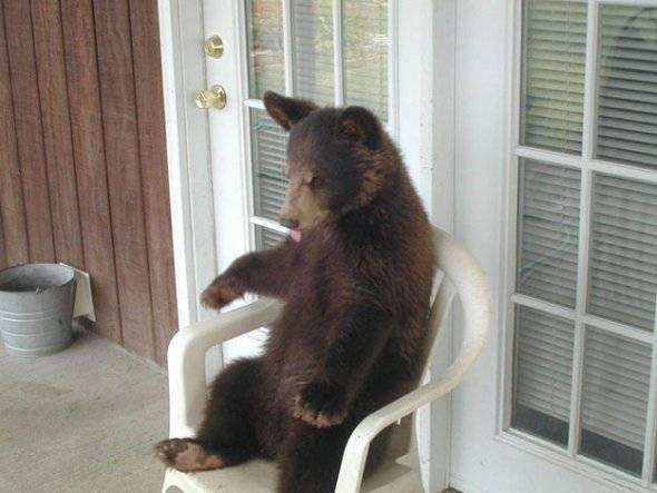 Seated-Animal-9