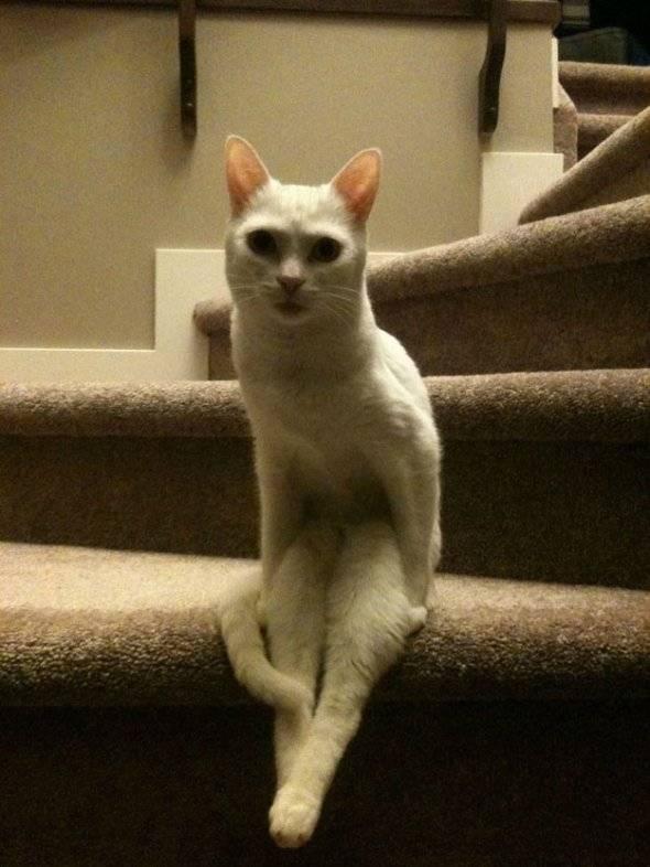 cat-Seated-Animal