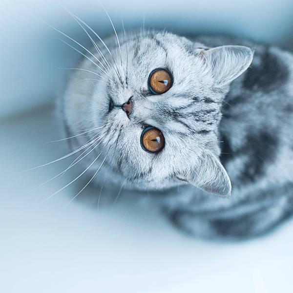 2-Funny-cat