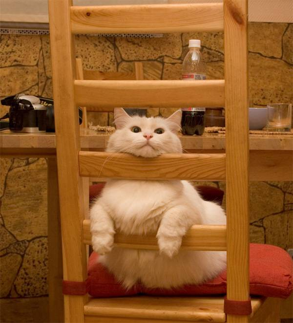 3-Cat-Relaxation