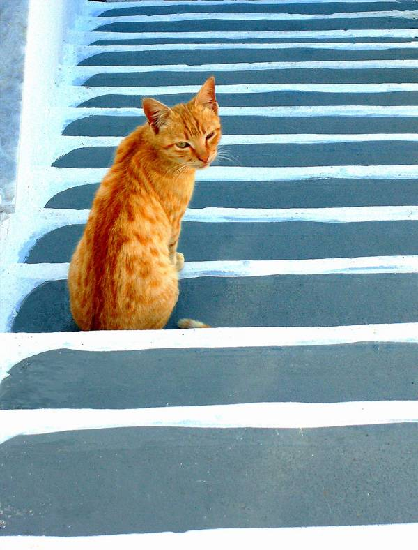 46-Cat-on-stairs