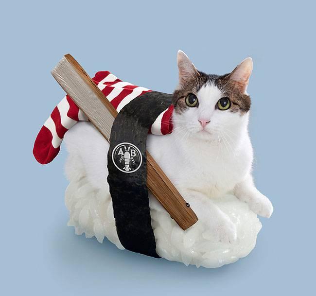 котов на суши