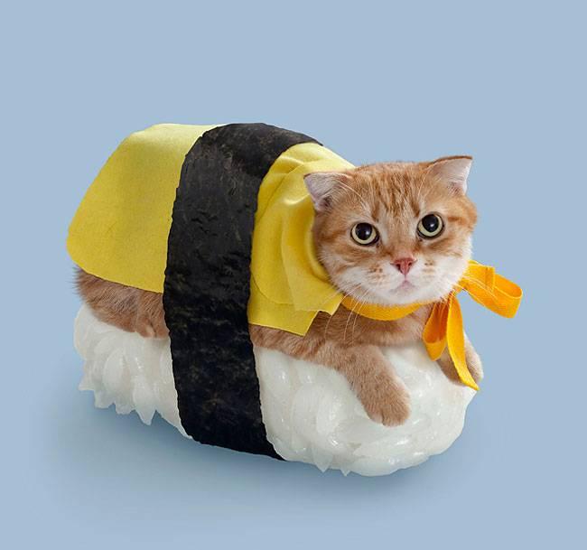 няшный котик под сушки