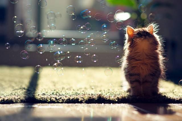 котенок - котик